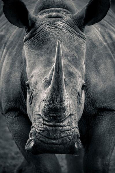 Robin Moore, 'Horns of Africa', 2017
