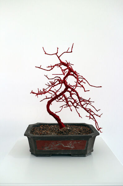 Philippa Lawrence, 'Bonsai, Bound IX ', 2019