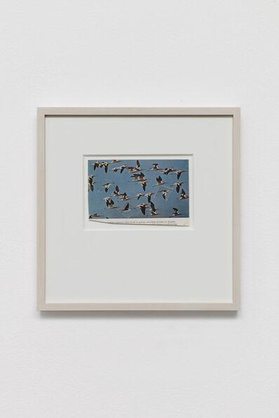 Ryan Mrozowski, 'Untitled (Flock)', 2020