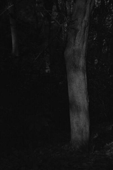 Daichi Koda, 'Forest 06', 2019