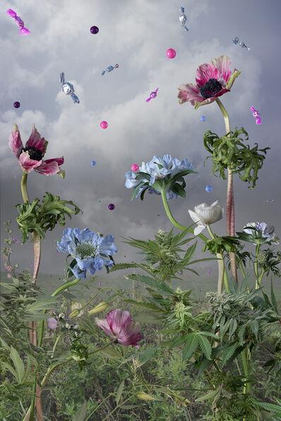 Jason DeMarte, 'Candied Cultivation', 2015