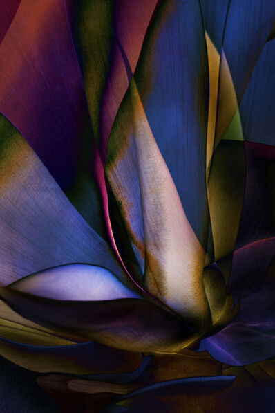 Ed Freeman, 'Plant Abstraction 18', 2017
