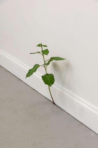 Tony Matelli, 'Weed 501', 2020