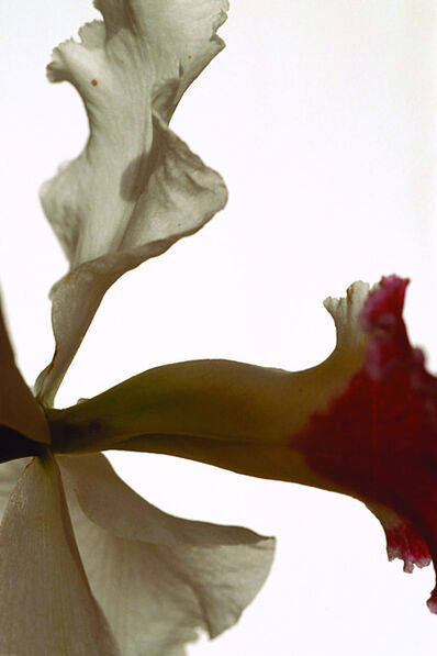 Thomas Florschuetz, 'Untitled Flower VI', 2000