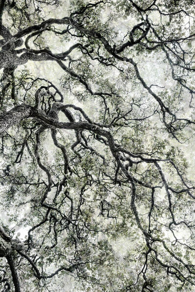 Santeri Tuori, 'Forest 44', 2019