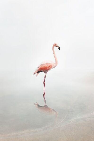 Alice Zilberberg, 'For Now Flamingo ', 2019