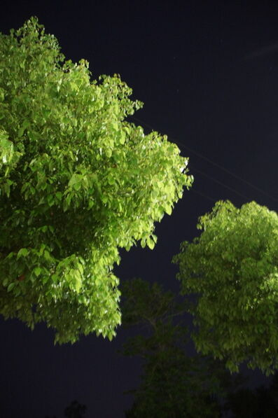 Kang Haitao 康海涛, 'Tree 2 树2', 2017