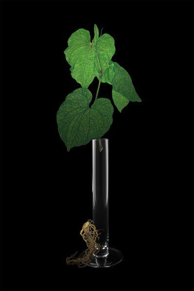 ShihFen Liu, 'Garden of Mullerian Ducts: Kava kava', 2016