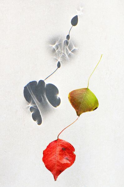 Larry Garmezy, 'I'll Follow - Botanical, Floral photography, abstract waterscape, autumn leaves, fine art photography, shadows, minimalist, serene, relaxing, 2020', 2020