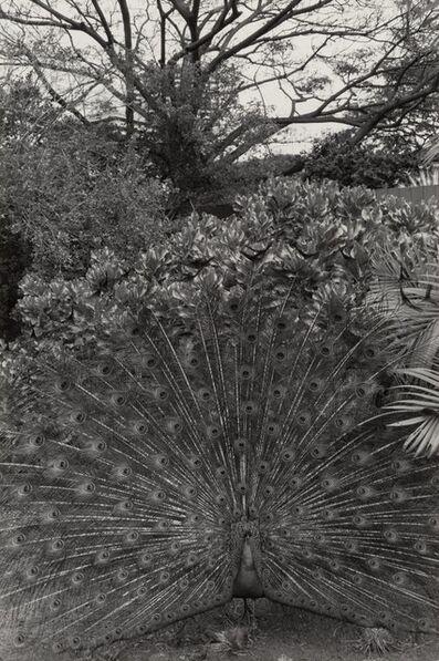 Lee Friedlander, 'Honolulu', 1977