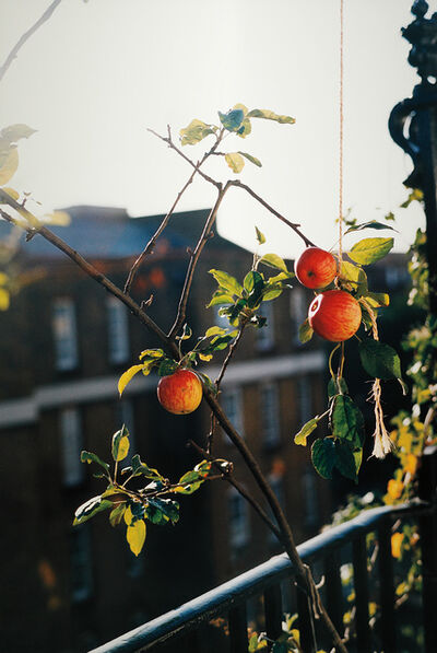 Wolfgang Tillmans, 'apple tree (f)', 2004