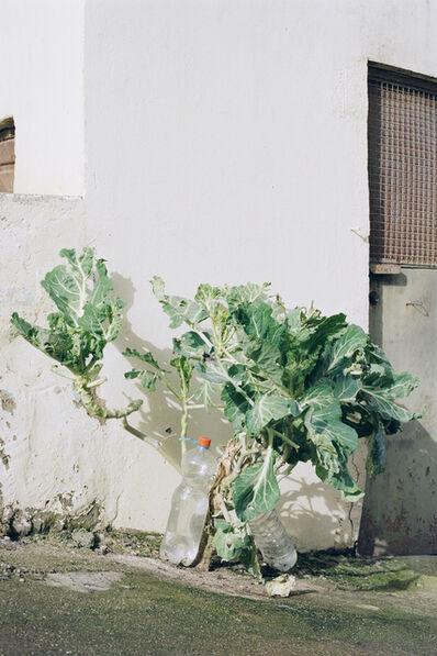 Fábio Cunha, 'Untitled', 2018