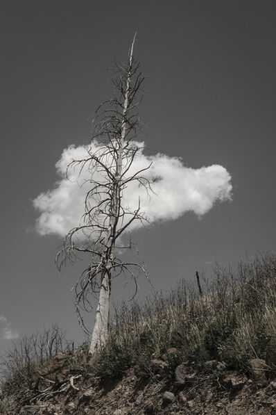 Patricia Galagan, 'One Tree, One Cloud ', 2014