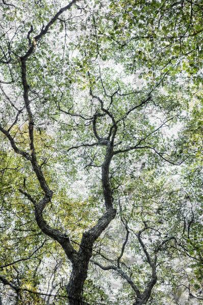 Santeri Tuori, 'Forest #31 ', 2016