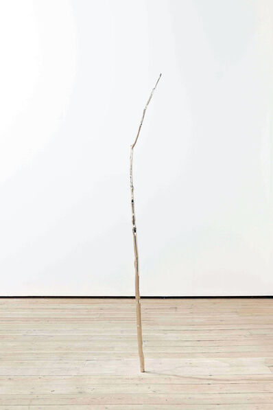 Amy Stephens, 'Birch in Space', 2010