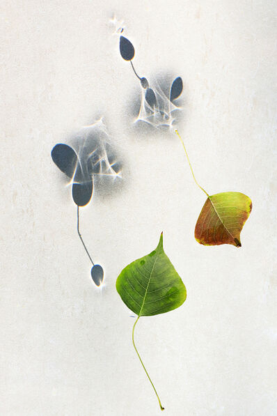 Larry Garmezy, 'Social Distance - Botanical, Floral photography, abstract waterscape, autumn leaves, fine art photography, shadows, minimalist, serene, relaxing, Pandemic, 2020', 2020