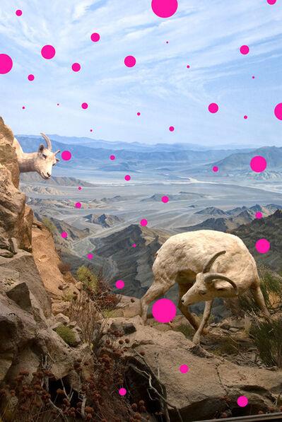 Jason DeMarte, 'Pink Placebo', 2008
