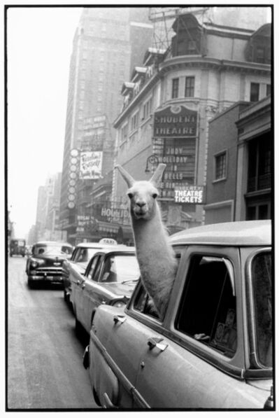 Inge Morath, 'A Llama in Time Square', 1957