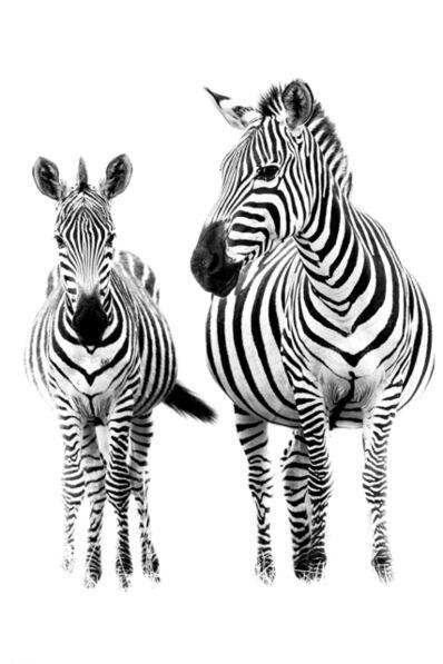 Marco Simoni, '200 stripes', 2013