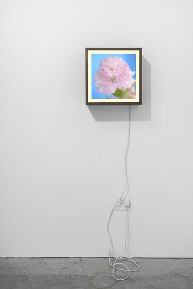 Owen Kydd, 'Cherry', 2015