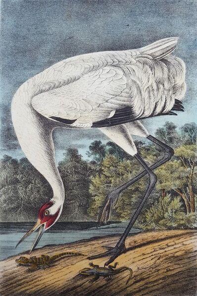John James Audubon, 'Whooping Crane', 1840-1844