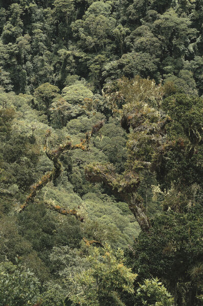 Emmet Gowin, 'Undisturbed primary mist forest near the Continental Divide Chiriqui Province, Panama', 2008