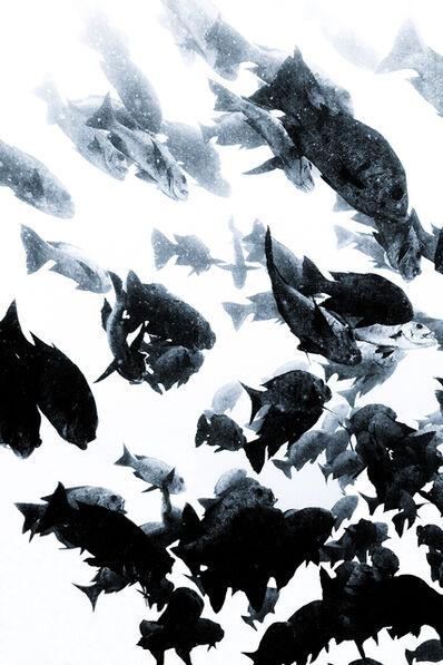 Chris Leidy, 'Calm Chaos'