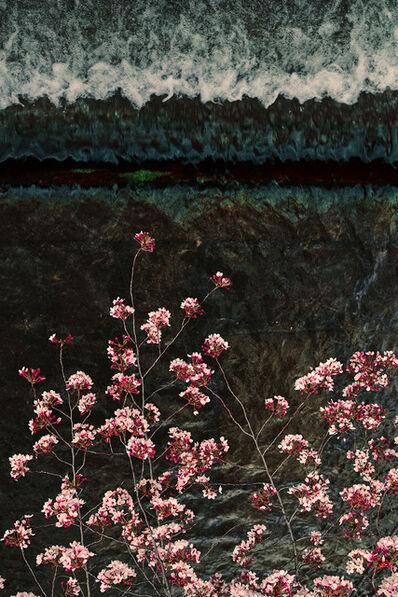David Burdeny, 'Sakura and stream_', 2021