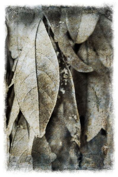 Russell James, 'Leaves', 2013