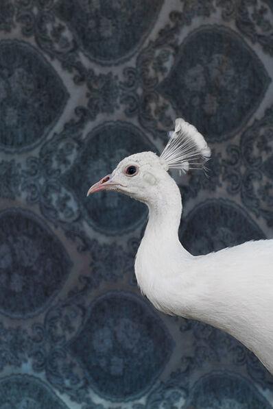 Claire Rosen, 'White Peacock No. 9490', 2018