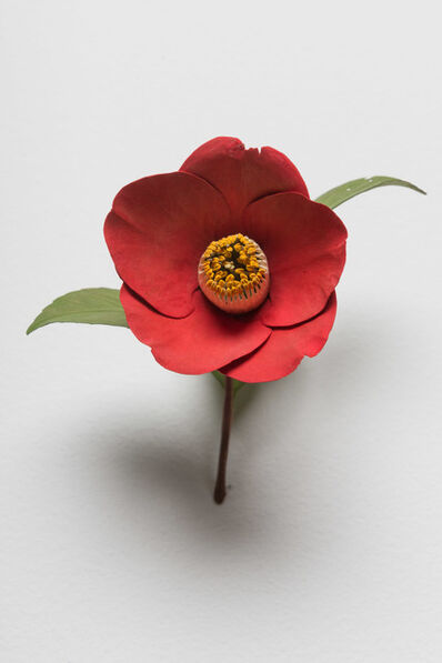 Yoshihiro Suda, 'Camellia', 2016