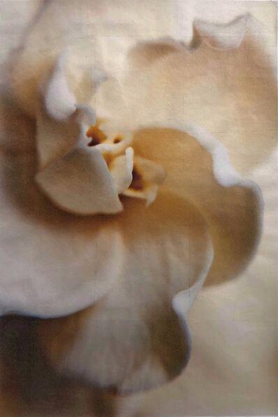Wendi Schneider, 'Gardenia, City Floral, Denver', 2011