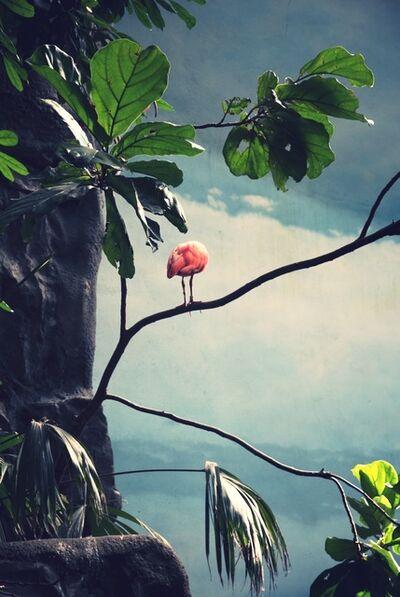 Ayline Olukman, 'Flamingo', 2018