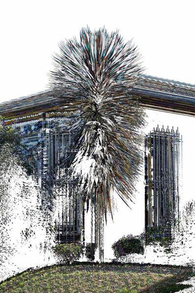Masood Kamandy, 'Yucca Heartbeat', 2012