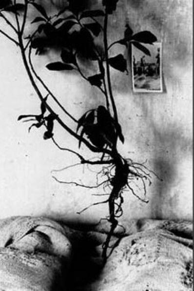 Antonio Biasiucci, 'Il filo di Arianna #5', 1986/87