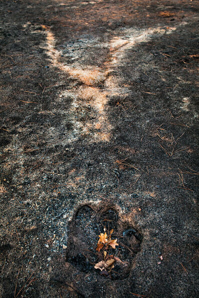 Carolyn Monastra, 'Stump hole and ash from a burned tree, East Bastrop, Texas', 2011