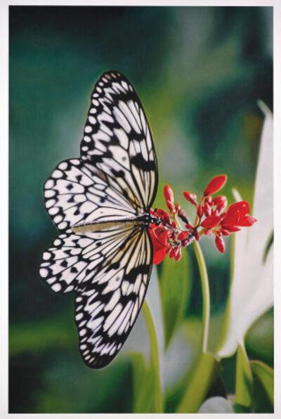 Damien Hirst, 'Damien Hirst, Paper Kite Butterfly on Oleander', 2011