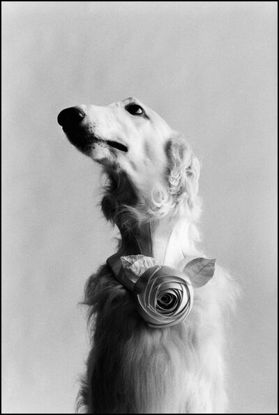 Elliott Erwitt, 'New York', 1999