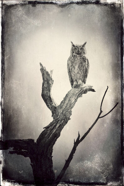 Wendi Schneider, 'Full Moon Owl, Keenesburg, CO', 2015
