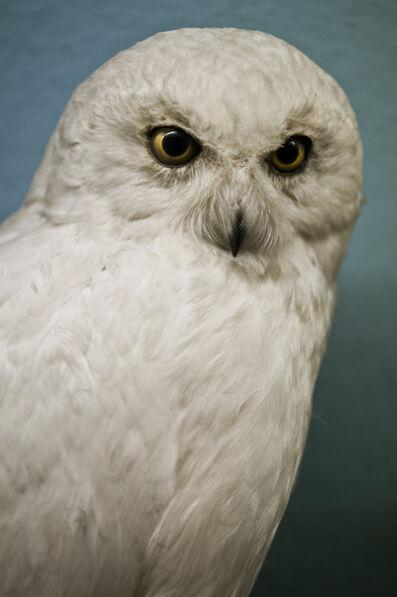 Gundula Friese, ' white owl', 2014