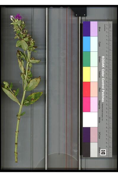 Mathieu Mercier, 'Untitled scan (flower/kodak)', 2011