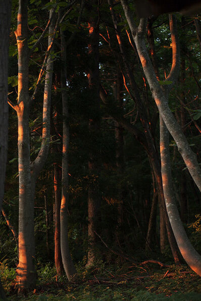 Anni Leppälä, 'Forest Interior (Aomori)', 2013