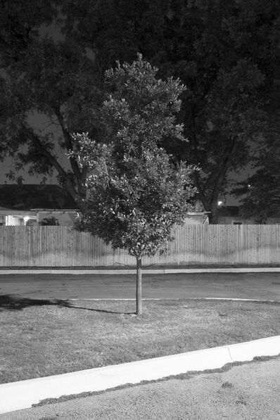 Adam Neese, 'Four Well Lit Trees in Texas and One in Tennessee 4', 2015