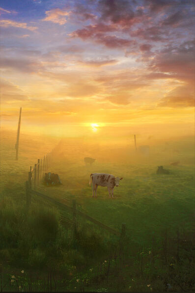 Scott Prior, 'Cows at Sunrise, Petaluma, CA', 2019
