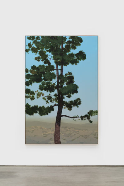 Jake Longstreth, ' In Glendale (Canary Island Pine 1)',  2019