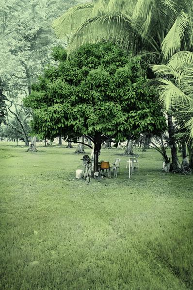 Robert Zhao Renhui, 'Mangosteen Tree, Old Kallang Airport. Ramanathan, 70, odd job labourer. ', 2015