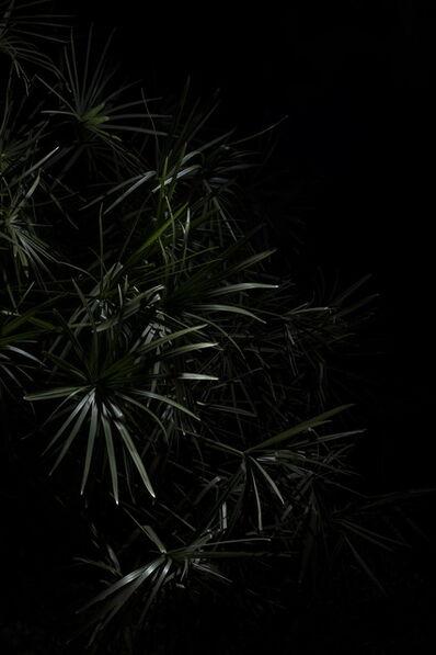 Giovanni Cocco, 'Plantarium 01', 2019