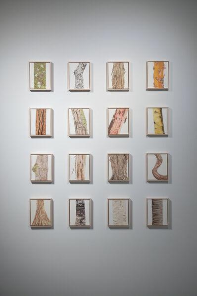 Sean Cavanaugh, 'Trunk 1-16', 2013-2016