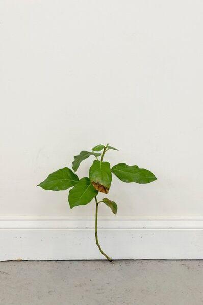 Tony Matelli, 'Weed 523', 2020