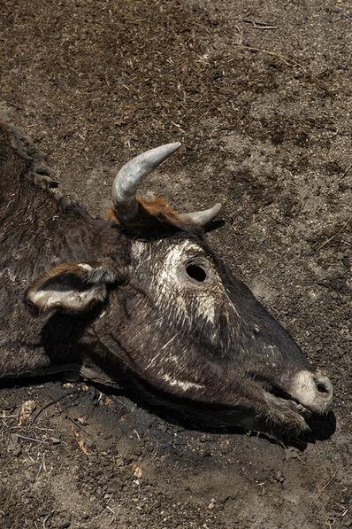 Eduardo Marco, 'vacas', 2019